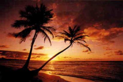 sunsetNpalmtrees