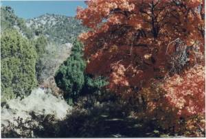 Autumn sentinel