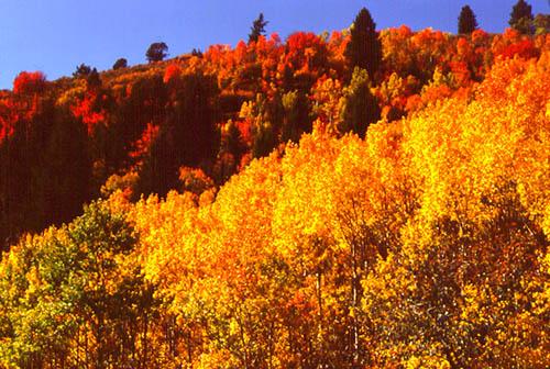 Vibrant Autumn cloak